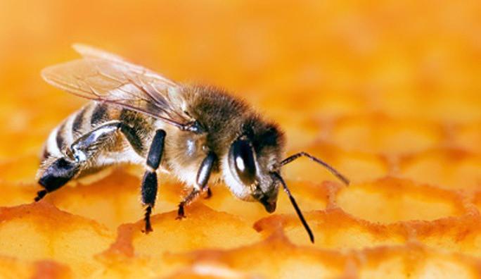 Kraj Vysočina nabízí finanční podporu včelařům při vyšetření na mor včelího plodu