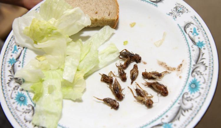 V prostorách Vysoké školy polytechnické se ve čtvrtek budou ochutnávat hmyzí lahůdky