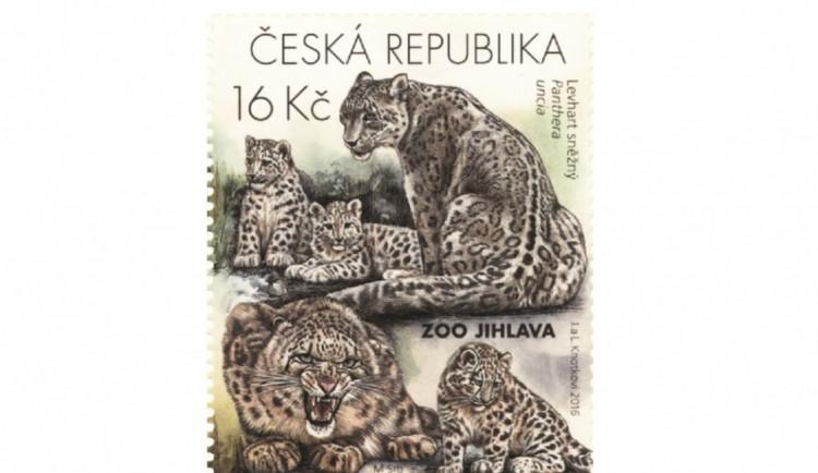 Česká pošta vydává edici známek s levharty sněžnými z jihlavské zoo