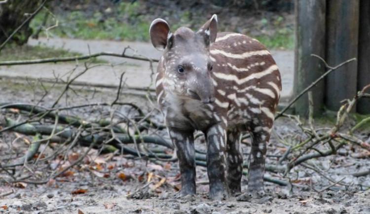 Jihlavská zoo chystá adventní a vánoční akce. Startuje sbírka Vánočky nejen pro kočky