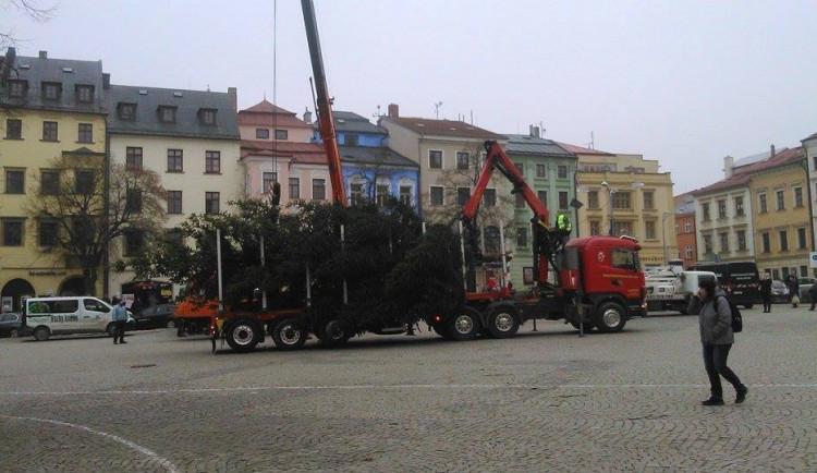 FOTO: Na jihlavské náměstí dorazil vánoční strom. Vyrostl na největším sídlišti Březinky
