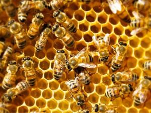 Včelaři jednali se zástupci kraje o spolupráci v tomto roce. Dočkají se finanční podpory
