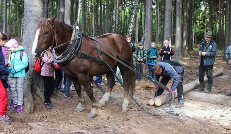 Děti půjdou s lesníkem do lesa, zasadí stromy, poznají zvěř a lesní práce