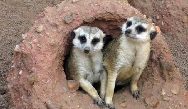 Za jedničky do jihlavské zoo zdarma! Po celé prázdniny bude devět komentovaných krmení zvířat denně