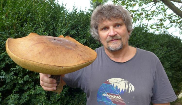 Zdeněk Rafaj z Humpolce našel rekordního křemenáče. Obvod klobouku je téměř jeden metr