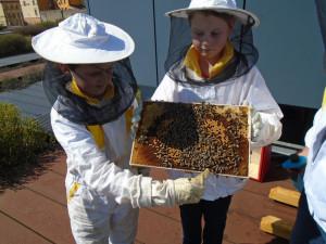 FOTO: Střecha jihlavského Cityparku po dvou letech opět bzučí, o včely se zde starají děti