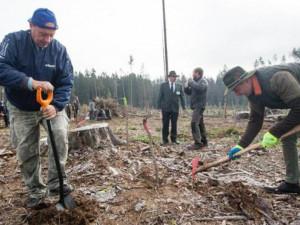 FOTO: Dobrovolníci na holinách po kůrovcové kalamitě sázeli mladé stromky