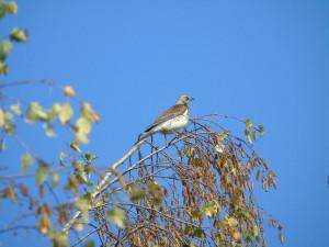 Starý Přísecký rybník na Jihlavsku bude mít svou ptačí pozorovatelnu. Pro odborníky i laiky