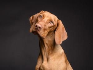 Za co hrozí majitelům psů pokuta?