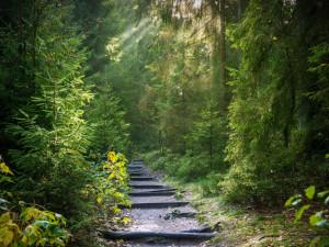 Na Jihlavsku vznikl po kůrovcové kalamitě první školní les. Mohly by přibýt další