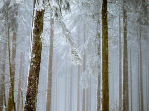 POČASÍ NA ÚTERÝ: K večeru může sněžit. Teploty během dne poklesnou