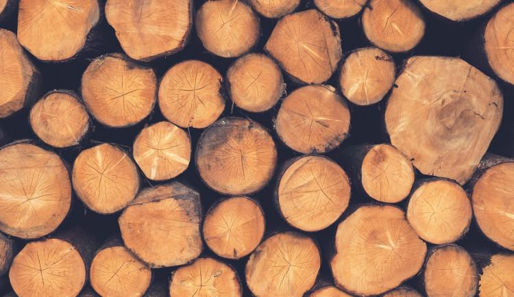 Zloděj v lese ukradl 120 kubíků smrkového dřeva. Majitel tak přišel skoro o 80 tisíc korun