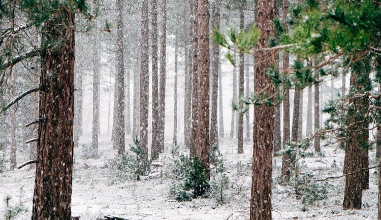 Bílé Vánoce? Zapomeňte, teploty se zřejmě budou pohybovat nad nulou