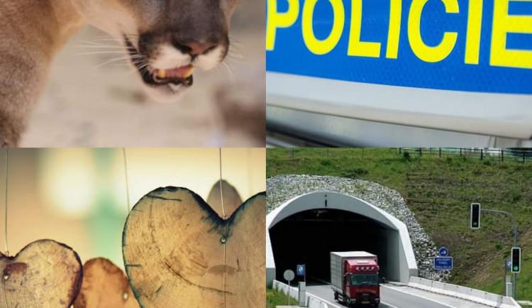 ROK 2019 NA DRBNĚ: Příběhy rodinných tragédií, hledaná puma a kamery u tunelu