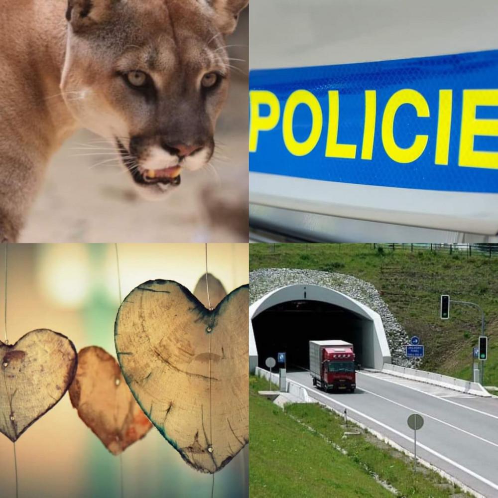 Cougar příběhy o webu
