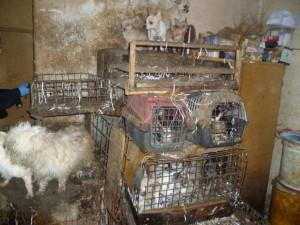 Tresty za týrání zvířat se možná zpřísní. Návrh přes nesouhlas Sněmovny přijal Senát