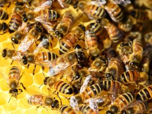 Na střeše krajského úřadu se nově zabydlí včely. O úly se budou starat mladí včelaři