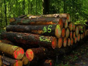 U Hodic ukradli v týdnu 160 kubíků dřeva, hrozí jim až osm let za mřížemi