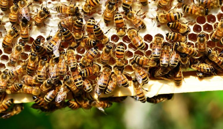 Osazení včelích úlů na krajském úřadě Vysočiny zdrží výskyt nemoci včel