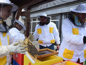 Krajský úřad v Jihlavě má vlastní včelstva. Starat se o ně bude včelařský kroužek