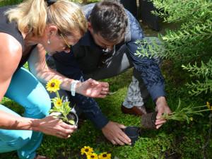 FOTO: Jihlavský park zdobí slunečnice. Upozorňují na nemoc, kterou trpí 22 tisíc lidí
