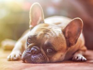 Horko nedělá dobře ani psům. Pozor na přehřátí a poleptání od horkého asfaltu