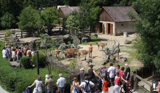 Branami jihlavské zoo do konce srpna prošlo skoro o 100 tisíc méně návštěvníků