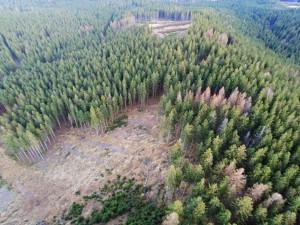 V kraji dál rychle ubývají smrkové lesy kvůli kůrovci. Špatná situace je i v lesích Jihlavy