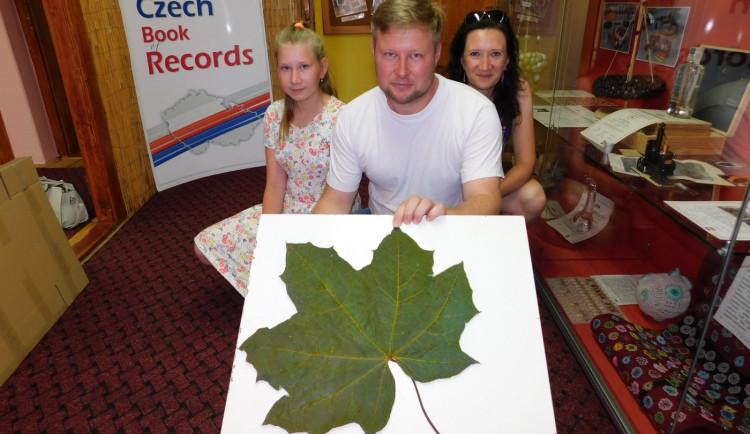 Gigantický javorový list z Kostelce se dostal do České knihy rekordů. Měří skoro půl metru