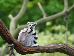 Znovu se otevře i Zoo Jihlava. Lidé musí dodržovat rozestup jednoho tapíra čili 2 metry