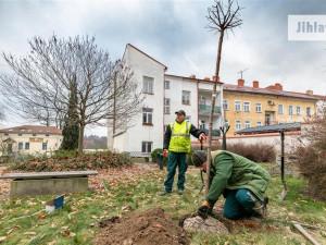 Počasí přeje. V Jihlavě se o sto šest sází nové stromy a keře