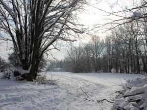 POČASÍ NA SOBOTU: Zima pokračuje. Místy bude sněžit, teploty zůstanou pod nulou