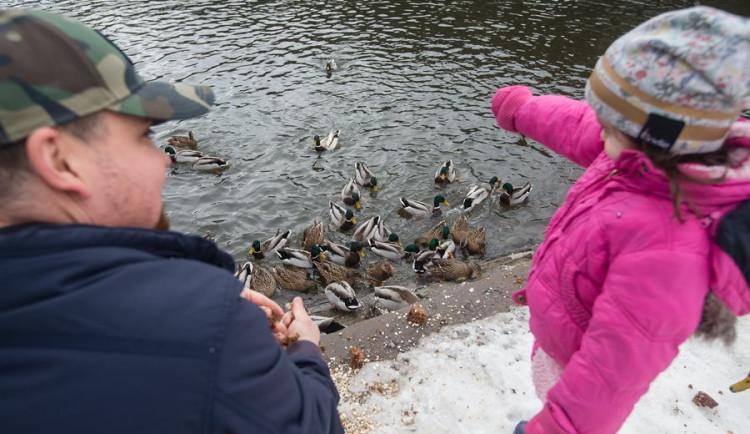 Přikrmování zvířat během tuhé zimy. Kterým druhům ptáků jde často o život?