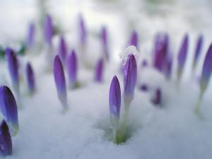 POČASÍ NA ČTVRTEK: Sem tam opět sněžení. Teploty mezi 2 až 5°C