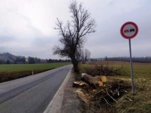 U silnic v kraji mizí stromy. Za pokácenou jabloň dáme dva nové do školky, říká Mojžyšková z KSÚV