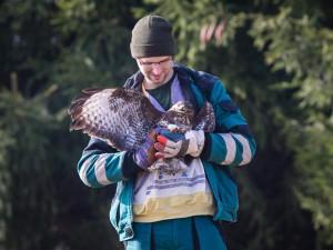 Ptákem roku 2021 je káně lesní. V pavlovské stanici často končí popálení nebo sražení jedinci