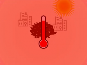 Pojďte diskutovat o změnách klimatu v Jihlavě. Virtuální kavárna se koná v pondělí v 17 hodin