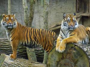 Jihlavská zoo měla historicky nejvyšší červencovou návštěvnost, Vodní ráj se naopak držel v podprůměru
