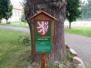 Nový památný strom v Jihlavě. Město plánuje vydat interaktivní mapu, seznámí s historií významných míst