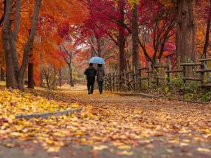 Konec léta, dnes začíná podzim. Den a noc budou stejně dlouhé
