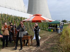 Lahodný mok ve stínu dukovanské elektrárny? Prvnívinobraní jaderné vinice přineslo přes 700 kilo hroznů