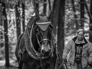 Do lesa ji přivedla láska ke koním a přírodě. Koňáků stahujících dřevo ale ubývá, říká Veronika Králová