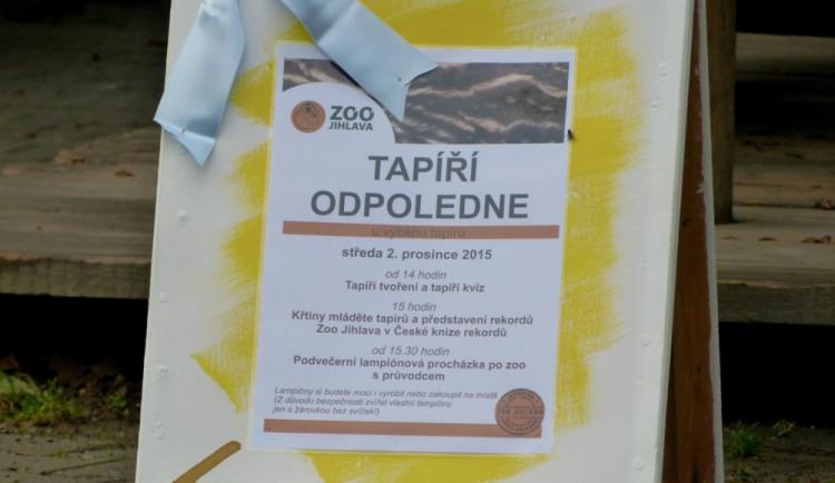 Jihlavská zoo pokřtila tapířího samečka. Kmotři mu vybrali jméno Ferda.