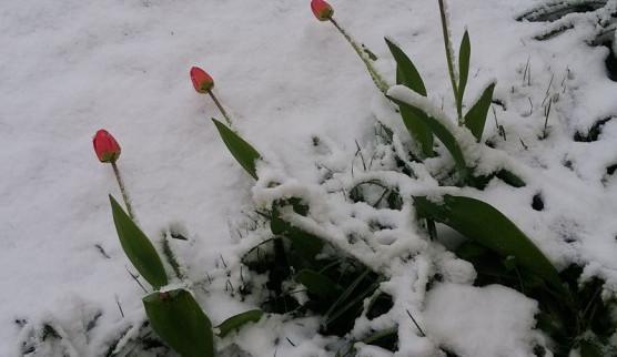 Sníh na konci dubna