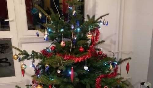 Hlasujte v soutěži o nejhezčí vánoční stromeček!